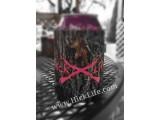 Hot Pink Gun Mossy Oak Can Cooler